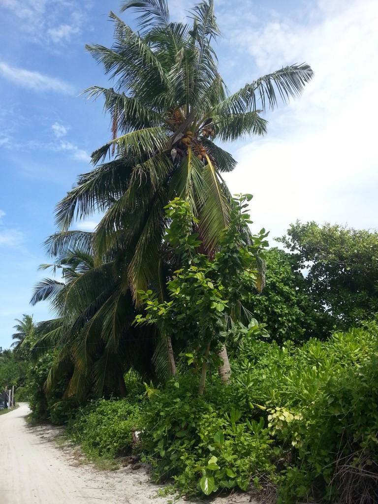 И так на всем острове