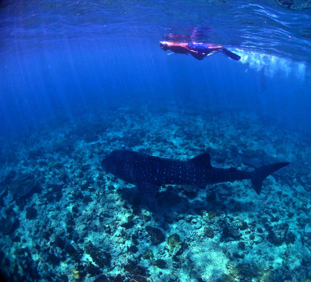 Сноркелинг на Мальдивах весьма неплох